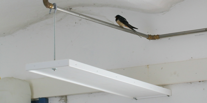 Ein Kotbrett unter einem beliebten Rastplatz der Vögel