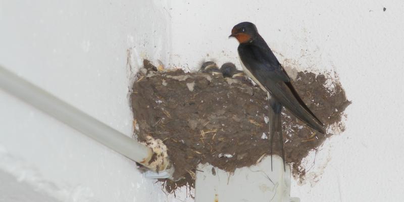 Auch eine ungünstige Stelle für ein Nest