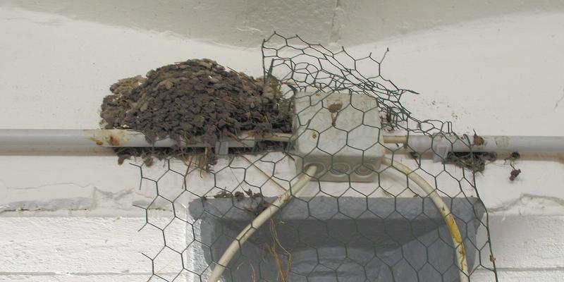 Verzweifelter Versuch, den Nestbau zu verhindern