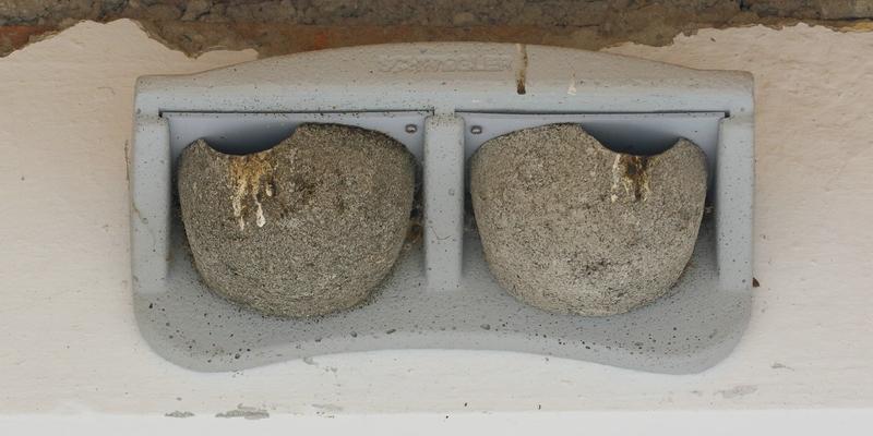 Künstliche Doppel-Nester für Umsiedlung oder Neuansiedlung