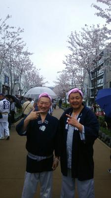 〈GP-17001〉 岡崎行雄さん:鎌倉さくら祭・2017年4月9日・鎌倉若宮大路(段葛)・コメント:生憎の空模様でしたが盛り上がりました。