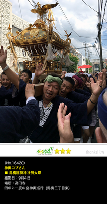神輿コブさん:馬橋稲荷神社例大祭, 2016年9月4日