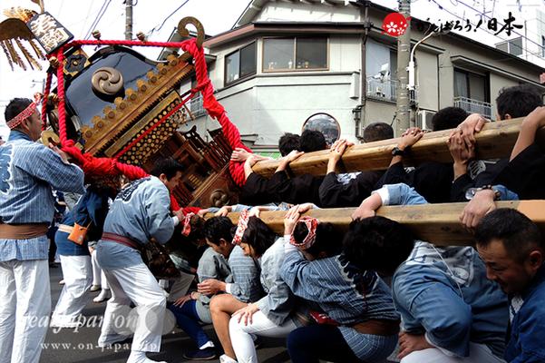 若駒會・成人式記念神輿渡御(2016年1月17日: 東京都荒川区)