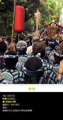神輿コブさん:赤坂氷川祭, 2016年9月18日, 新調された赤坂氷川神社宮神輿