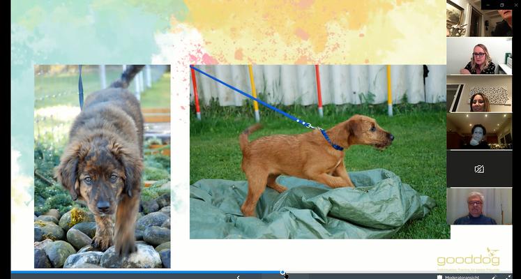 Online Welpenseminare (c) Hundeschule gooddog
