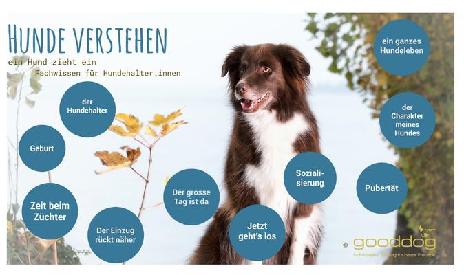 Theoriekurs (c) Hundeschule gooddog