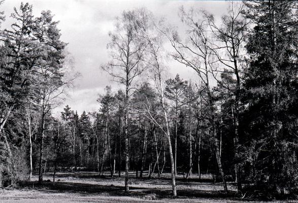 Bäume, Minolta X700