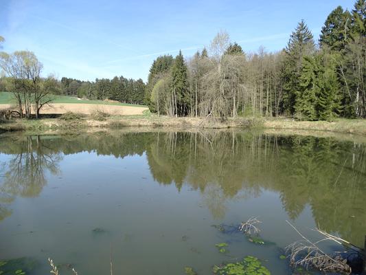 Der Östliche der beiden großen Teiche im Frühjahr 2015