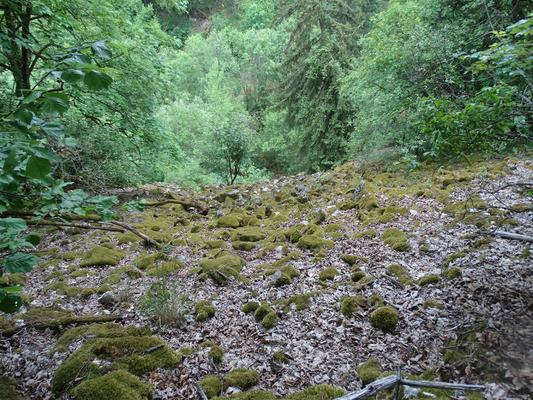 Halboffene, natürliche Blockschutthalde