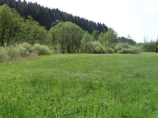 Feuchtwiese mit Hochstaudenflur südlich von Arzthofen