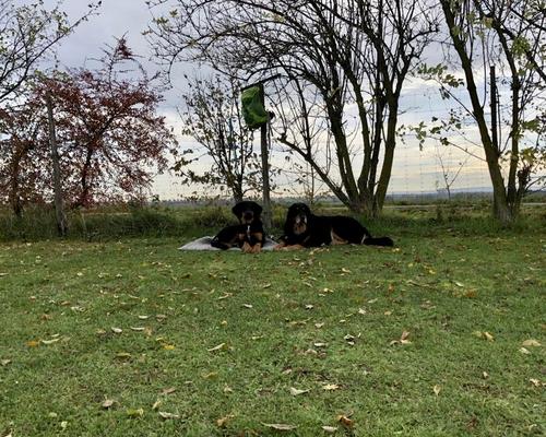 Pause auf dem Hundeplatz in Niederelvenich