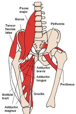 tiefe Muskelschichten der Hüfte und des Beckens