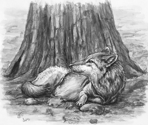 Wolf liegend Aquarell Tierillustration Wildtier Schwarzweiß Illustration
