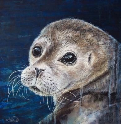 Seehund Robbe Heuler Tierportrait