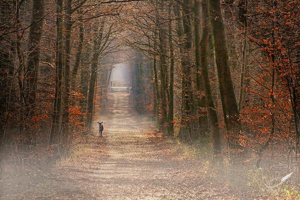 Waldweg im Morgennebel