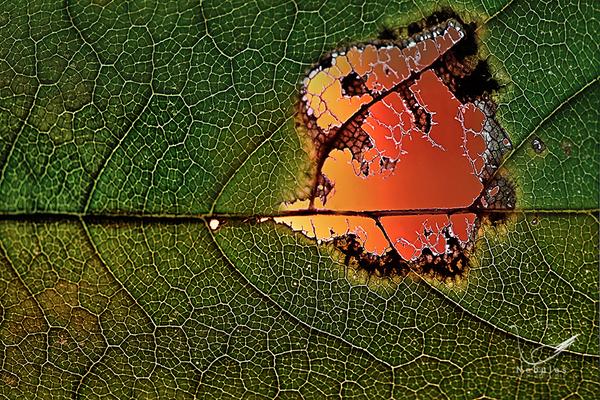 Blatt vor der Herbstsonne