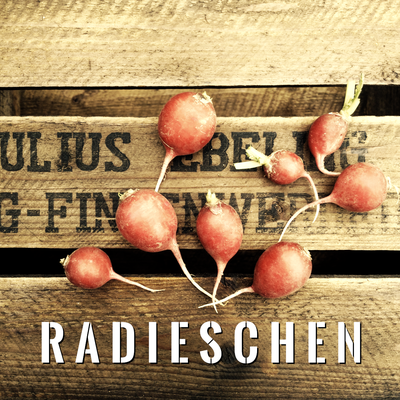 Radieschen Anbau erntefibel.de