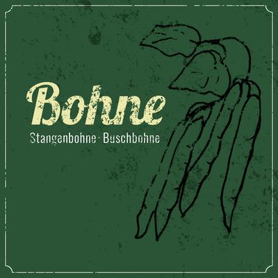 Bohnen Anbau erntefibel.de