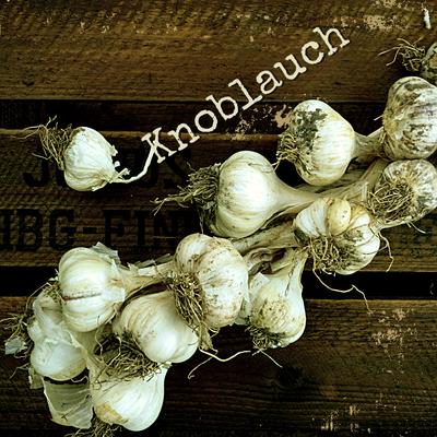 Knoblauch Anbau erntefibel.de
