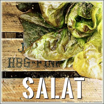 Salat Anbau erntefibel.de