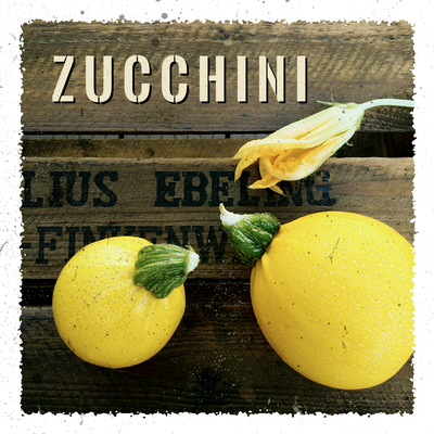 Zucchini Anbau erntefibel.de