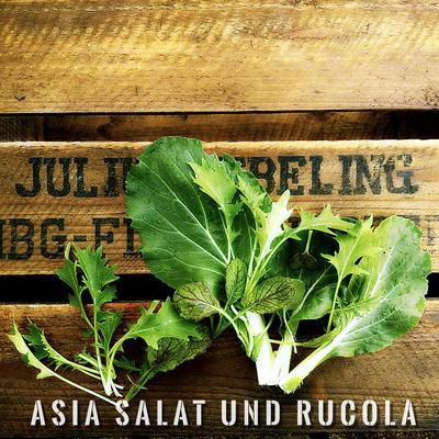 Asia Salat und Rucola Anbau erntefibel.de