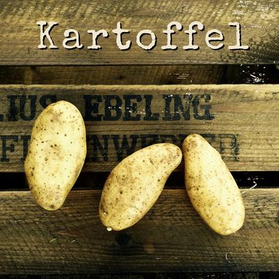 Kartoffel Anbau erntefibel.de