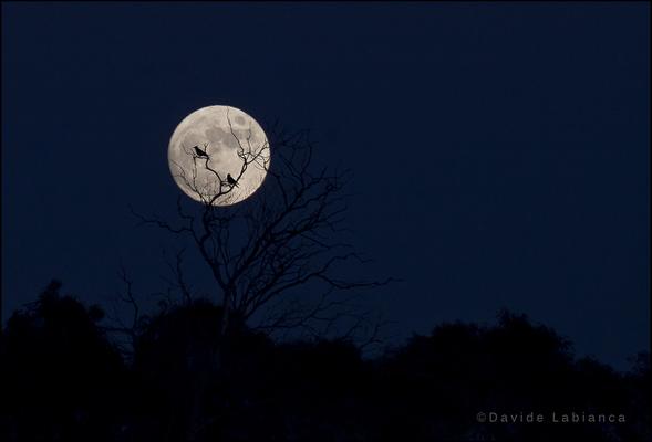full moon - blu hour