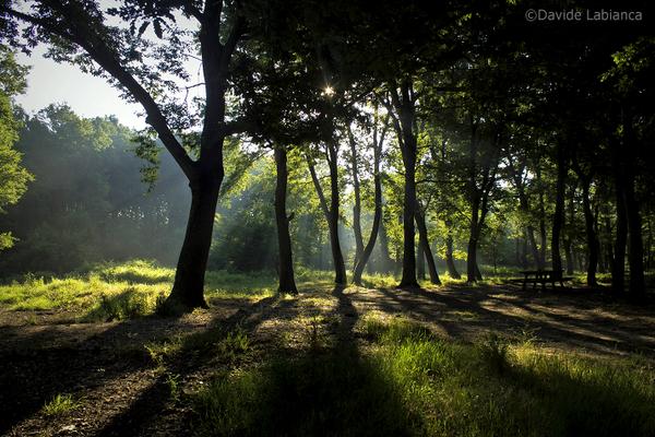 le luci del bosco