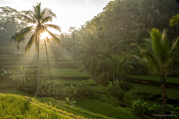 Tegalalang Reisfelder in Ubud
