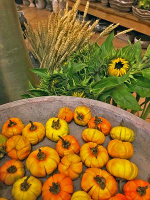 Impressionen, Blumenladen, Petite Fleur, Dekoration, saisonal, Herbst, Zierkürbis, Sonnenblume