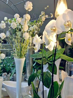 Impressionen, Blumenladen, Petite Fleur, Dekoration, Orchidee