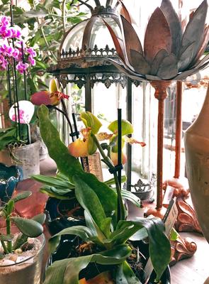 Impressionen, Blumenladen, Petite Fleur, Dekoration, Laterne, Orchidee, Lotus