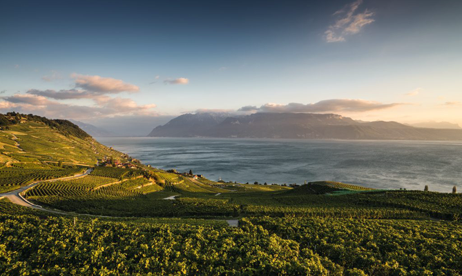 Lavaux, Abendstimmung © Switzerland Tourism