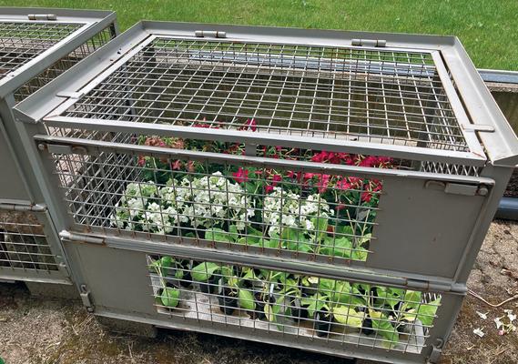 Juli 2020 – Aus ganz Schleswig -Holstein und darüber hinaus wurden Tabakpflanzen zusammengetragen.