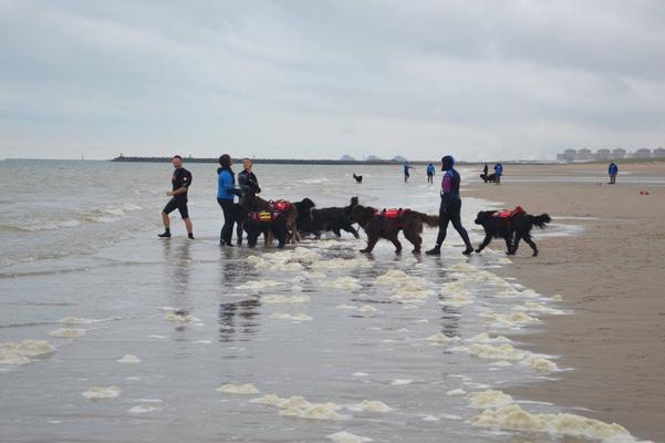 club canin oye plage