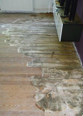 Große Ausdehnung eines echten Hausschwamms unterhlab eines Dielenbodens
