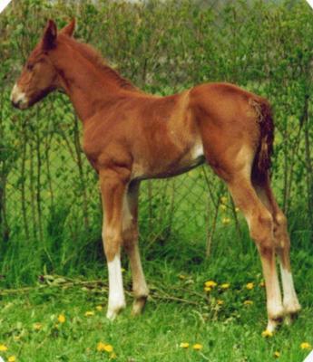 Lysa 2001