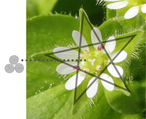 Chickweed with pentagram and triskele