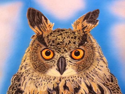 Screech Owl / Cardboard 25.3x36.3cm