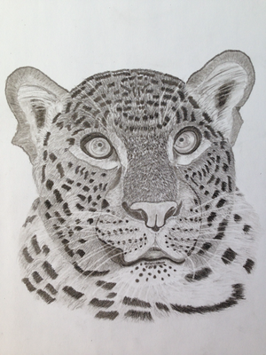 Leopard / Kohle A3