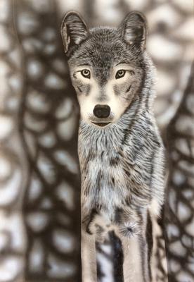 Wolf / Cardboard 25.3x36.3cm