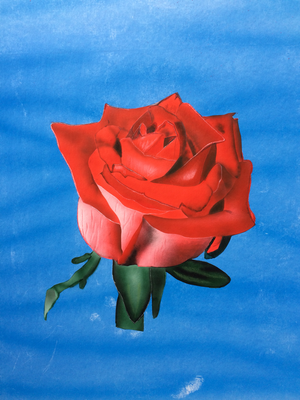 Red Rose / Cardboard 25.3x36.3cm