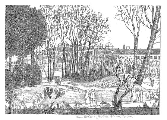 Im Botanischen Garten der Universität Wien - Zeichnung, 20x30 cm, 2013, A. Kästner
