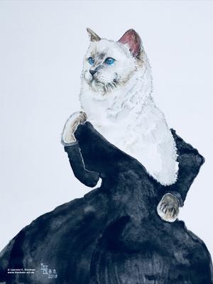 Weltkatzentag 2018