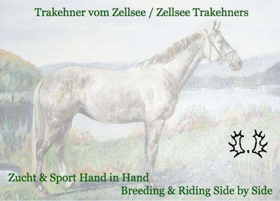 Trakehner vom Zellsee - Zucht und Sport Hand in Hand
