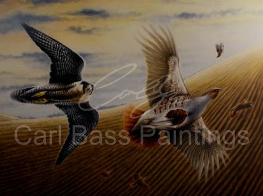 Peregrine Persuing Grey Partridge - Acrylic on Board
