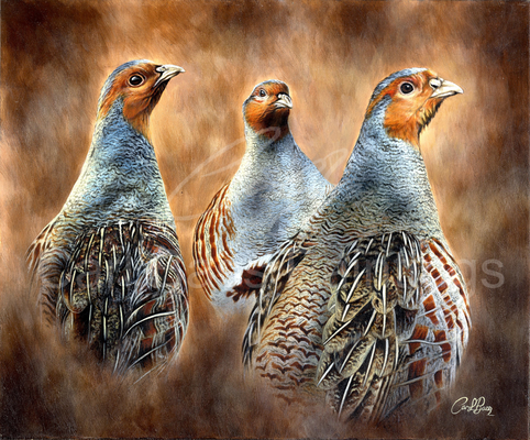 Grey Partridge Trio