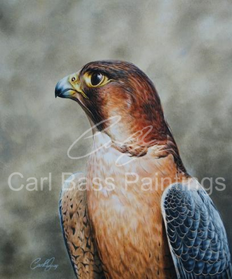 Red-Naped Saheen - Acrylic on Board