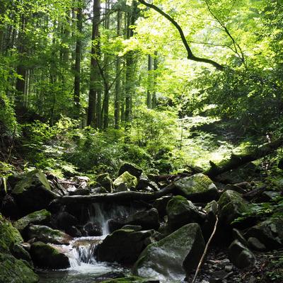 讃岐山脈の湧き水